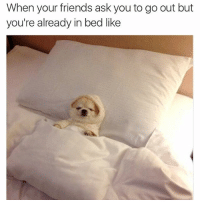 Don't ask me to hang this late- I'm in bed already there's no coming back now, there's a strong gravitational pull on me to this bed rn sorry fam (DM for dog creds): When your friends ask you to go out but  you're already in bed like Don't ask me to hang this late- I'm in bed already there's no coming back now, there's a strong gravitational pull on me to this bed rn sorry fam (DM for dog creds)
