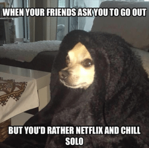 Animals, Chill, and Dogs: WHEN YOUR FRIENDS ASKVOU TO GO OUT  BUT YOU'D RATHER NETFLIX AND CHILL  SOLO Dog Memes Of The Day 30 Pics – Ep36 #dogs #doglovers #lovelyanimalsworld - Lovely Animals World