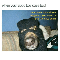 Bad, Memes, and Chicken: when your good boy goes bad  hand over the chicken  nuggers if you want to  see the cate again  @chaos.reigns you better do what he says chaosreigns dogsbeingdogs catsofinstagram goodboys chickennuggetsarelife