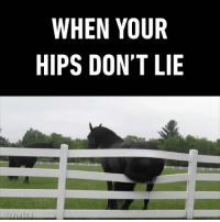 Little did the horse know his itchy butt will cause so much destruction. Follow @9gag App📲👉@9gagmobile 👈 9gag horse hipsdontlie (credit: @afvofficial): WHEN YOUR  HIPS DON'T LIE  LIGGoafvofficial Little did the horse know his itchy butt will cause so much destruction. Follow @9gag App📲👉@9gagmobile 👈 9gag horse hipsdontlie (credit: @afvofficial)
