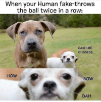 Memes, 🤖, and Bow: When your Human fake-throws  the ball twice in a row:  CASH ME  OUSSIDE  HOW  BOW  DAH I shit on your bed, HOW BOW DAH? @dogsbeingbasic