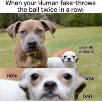 When your Human fake-throws  the ball twice in a row:  CASH ME  OUSSIDE  HOW  BOW  DAH HOW BOW DAH?!