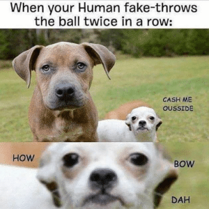 Animals, Dogs, and Fake: When your Human fake-throws  the ball twice in a row:  CASH ME  OUSSIDE  HOW  BOW  DAH Dog Memes Of The Day 30 Pics – Ep53 #animalmemes #dogmemes #memes #dogs - Lovely Animals World