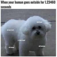 Funny, Meme, and Queen: When your human goes outside for 1.23460  seconds  dunt leave  no more bork  urbest friend  will beehave  pls human @girlwithnojob is a meme queen