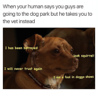 Memes, Omg, and Shoes: When your human says you guys are  going to the dog park but he takes you to  the vet instead  I has been betrayed  look squirrel!  I will never trust again  I am a fool in doggo shoes It's ruff being a dog (omg someone kill me right now) | 👉 @betasalmon for more banana stands