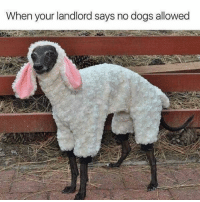 Dank, Dogs, and 🤖: When your landlord says no dogs allowed