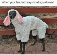 Dogs,  No, and  Landlord: When your landlord says no dogs allowed