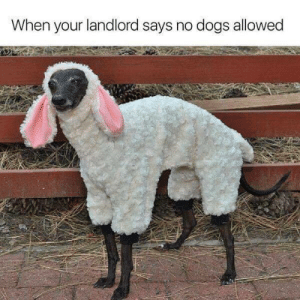 Well the landlord had no problem at all: When your landlord says no dogs allowed Well the landlord had no problem at all