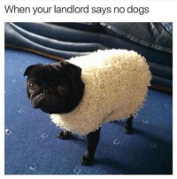 Dogs, Funny, and Memes: When your landlord says no dogs SarcasmOnly