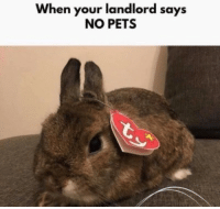 Pets,  No, and  Landlord: When your landlord says  NO PETS