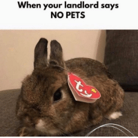 Funny, Life, and Life Hack: When your landlord says  NO PETS Life hack