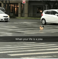 Why did the chicken cross the road? 😂🐔, follow me @punlifestyle for more puns 💕: When your life is a joke Why did the chicken cross the road? 😂🐔, follow me @punlifestyle for more puns 💕