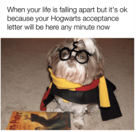 Internet, Life, and Love: When your life is falling apart but it's ok  because your Hogwarts acceptance  letter will be here any minute now  @notoapret i love the internet