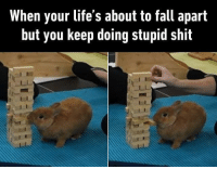 Memes, 🤖, and Jenga: When your life's about to fall apart  but you keep doing stupid shit But you are cute, anything you do is not stupid, but cute. Follow @9gag @9gagmobile 9gag jenga bunny