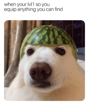 Woofermelon helm by katomatic22 MORE MEMES: when your lv1 so you  equip anything you can find  2  0  2 Woofermelon helm by katomatic22 MORE MEMES