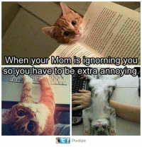 Cats, Memes, and Mom: When your Mom ignoring you  So you have to be extra annoying  Postize Here we like to say endearing. Via Cats on Catnip