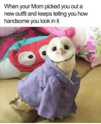 """Good, Http, and Mom: When your Mom picked you out a  new outfit and keeps telling you how  handsome you look in it <p>She picks out good outfits! via /r/wholesomememes <a href=""""http://ift.tt/2zlhD7F"""">http://ift.tt/2zlhD7F</a></p>"""