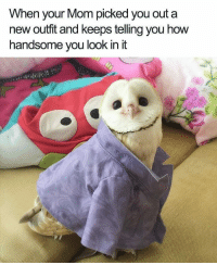 Memes, Mom, and 🤖: When your Mom picked you out a  new outfit and keeps telling you how  handsome you look in it Very handsome birb