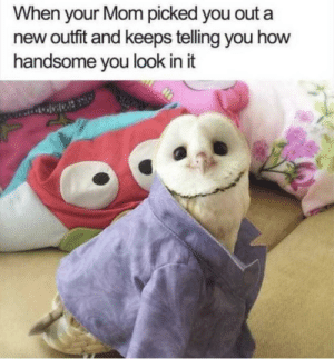 Dank, Memes, and Target: When your Mom picked you out a  new outfit and keeps teling you how  handsome you look in it Well he is very handsome! by nixonico MORE MEMES