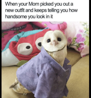 Cute, Mom, and How: When your Mom picked you outa  new outit and keeps telling you how  handsome you look in it Hoo is a cute little guy