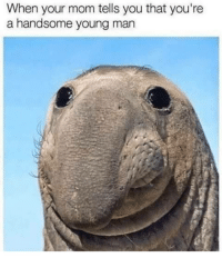 meirl: When your mom tells you that you're  a handsome young man meirl