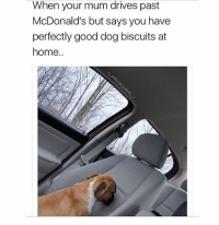 Follow me @antisocialtv @lola_the_ladypug @x__social_butterfly__x @x__antisocial_butterfly__x: When your mum drives past  McDonald's but says you have  perfectly good dog biscuits at  home.. Follow me @antisocialtv @lola_the_ladypug @x__social_butterfly__x @x__antisocial_butterfly__x