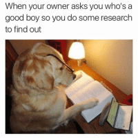 Find, Good Boy, and Whos A: When your owner asks you who's a  good boy so you do some research  to find out 150k likes omg <3