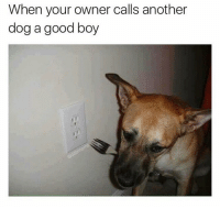 Dank Memes, Classics, and Classic: When your owner calls another  dog a good boy Another classic from @dabmoms 🔥🔥