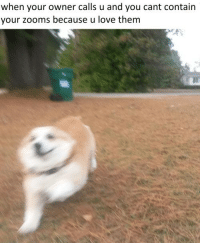Love, Them, and You: when your owner calls u and you cant contain  your zooms because u love them