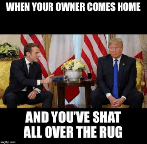 Reddit, Home, and Com: WHEN YOUR OWNER COMES HOME  AND YOU'VE SHAT  ALL OVER THE RUG  imgflip.com My pet: it wasn't me!