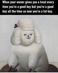 fat boy: When your owner gives you a treat every  time you're a good boy but you're a good  boy all the time so now you're a fat boy.