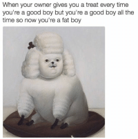 This is me in dog form. I reward myself daily with food. I love food. I love life. That is all. (Follow @bigsoff): When your owner gives you a treat every time  you're a good boy but you're a good boy all the  time so now you're a fat boy This is me in dog form. I reward myself daily with food. I love food. I love life. That is all. (Follow @bigsoff)