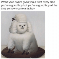 I can relate to this: When your owner gives you a treat every time  you're a good boy but you're a good boy all the  time so now you're a fat boy I can relate to this