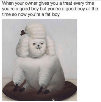 Relatable.: When your owner gives you a treat every time  you're a good boy but you're a good boy all the  time so now you're a fat boy Relatable.