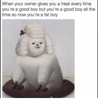 Funny, Lol, and Good: When your owner gives you a treat every time  you're a good boy but you're a good boy all the  time so now you're a fat boy Lol
