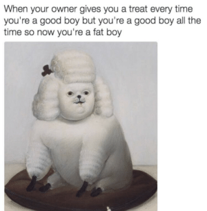 fat boy: When your owner gives you a treat every time  you're a good boy but you're a good boy all the  time so now you're a fat boy
