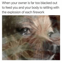 Funny, Internet, and Blacked: When your owner is far too blacked out  to feed you and your body is rattling with  the explosion of each firework  @douggiehouse I'm literally shook (@douggiehouse via @heckoffsupreme two of the dumbest and funniest guys on the internet)