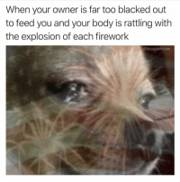 Blacked, Help, and Dank Memes: When your owner is far too blacked out  to feed you and your body is rattling with  the explosion of each firework  @douggiehouse Help @douggiehouse