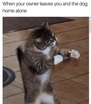Being Alone, Home Alone, and Memes: When your owner leaves you and the dog  home alone