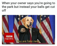 Photoshop skills -2-10: When your owner says you're going to  the park but instead your balls get cut  off  BBC  NEWS  You are fake news Photoshop skills -2-10
