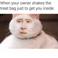 Memes, 🤖, and You: When your owner shakes the  treat bag just to get you inside WHYYY (follow @sean_speezy for more 🔥)