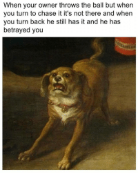 Chase, Dank Memes, and Back: When your owner throws the ball but when  you turn to chase it it's not there and when  you turn back he still has it and he has  betrayed you
