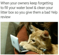 Memes, Yelp, and 🤖: When your owners keep forgetting  to fill your water bowl & clean your  litter box so you give them a bad Yelp  review Human! I need better service or I will ruin you with Yelp!