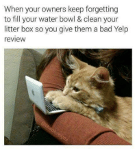 Bad, Water, and Yelp: When your owners keep forgetting  to fill your water bowl & clean your  litter box so you give them a bad Yelp  review