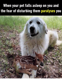 9gag, Dank, and Funny: When your pet falls asleep on you and  the fear of disturbing them paralyses you It's time to wake up, my precious.  https://9gag.com/gag/aoN0z5x/sc/funny?ref=fbsc