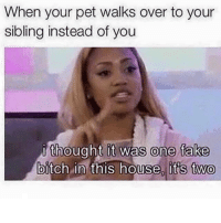 Bitch, Fake, and House: When your pet walks over to your  sibling instead of you  thought it was one fake  bitch in this house, it's two  0