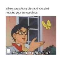 literally me lol: When your phone dies and you start  noticing your surroundings  what kind of bird is this? literally me lol