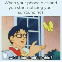 ♡CuntCakes♡: When your phone dies and  you start noticing your  Surroundings  what kind of bird is this? ♡CuntCakes♡
