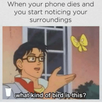 me irl: When your phone dies and  you start noticing your  surroundings  what kind of bird is this? me irl