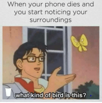 """<p>Take a break from your phone and enjoy nature via /r/memes <a href=""""http://ift.tt/2y2qmdR"""">http://ift.tt/2y2qmdR</a></p>: When your phone dies and  you start noticing your  surroundings  0  what kind of bird is  this? <p>Take a break from your phone and enjoy nature via /r/memes <a href=""""http://ift.tt/2y2qmdR"""">http://ift.tt/2y2qmdR</a></p>"""